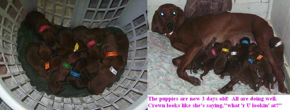 basketopuppies091308ncrownwpups.jpg